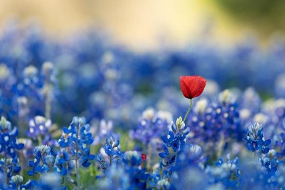 Emanet Çiçek